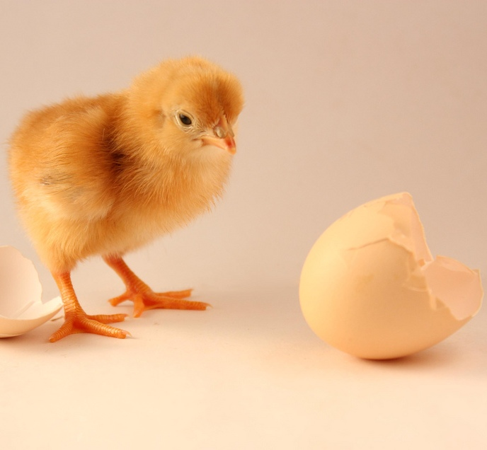 """The Chicken & The Egg Dilemma"", obra de Ruben Alexander"