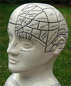 Los mapas mentales representan la forma de trabajar del cerebro